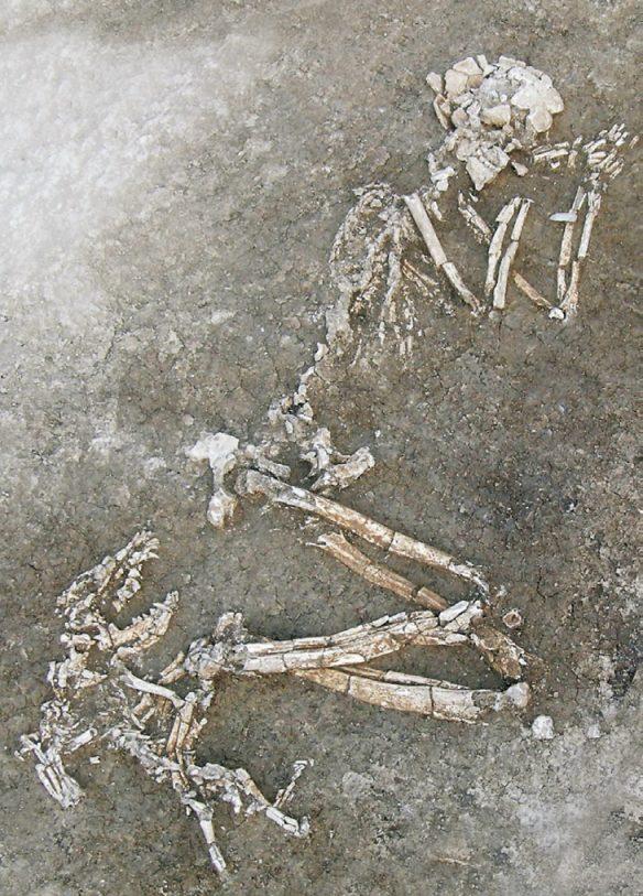 Il cane e l'uomo - Storia, archeologia e immagini di una millenaria convivenza